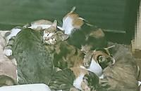317_cats